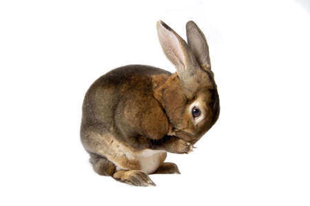 Washing bunny