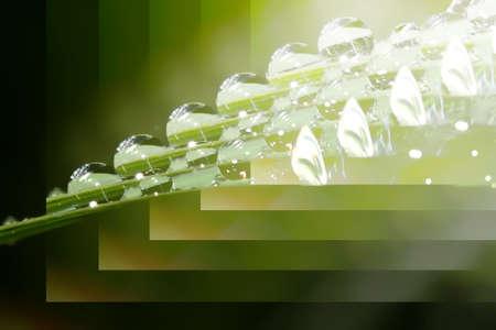 Resumen sobre la imagen paso-el tipo de comportamiento de gotas de lluvia y dewdrops.  Foto de archivo