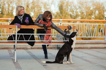 Two young women with a stray dog. photo