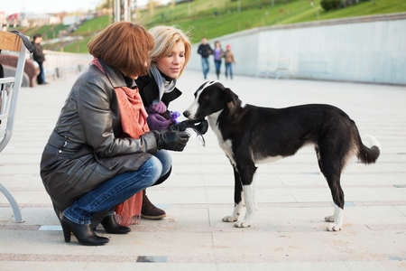 Women and a dog photo