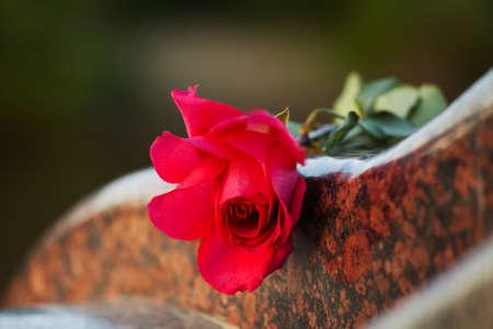 Rose auf dem Grabstein Standard-Bild
