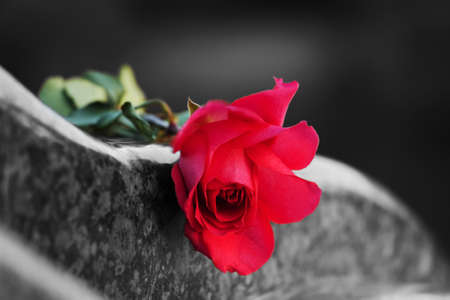 headstones: Rose on the tombstone