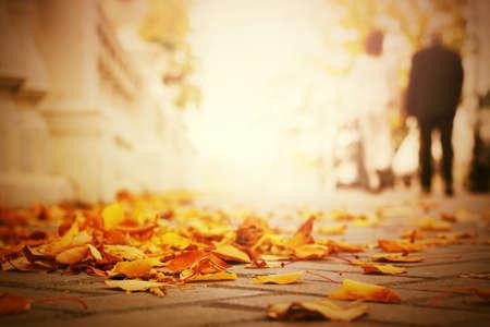 passerby: Fallen leaves on the sidewalk in city park