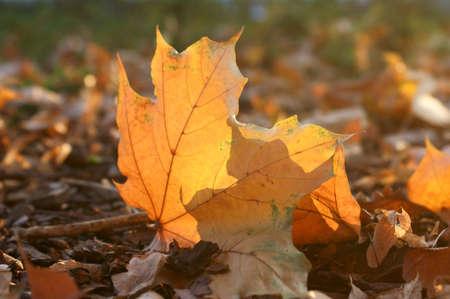 autumn, park