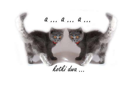 lullaby: kittens