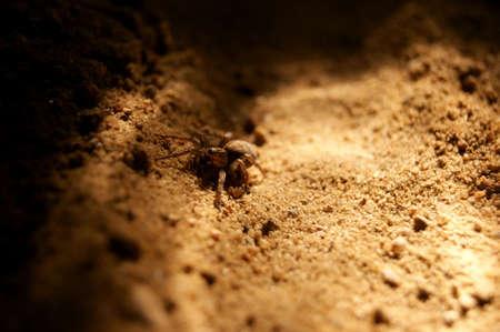 Spider on sand, night