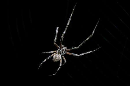 Spider s picture on black background Reklamní fotografie