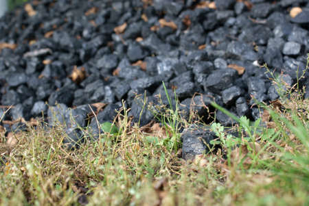 The Italian nuts on grass beside heap of carbon