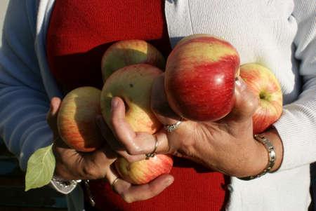Mature, shapely apples  Dorodne owoce