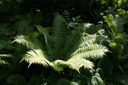 The plant, fern growing wild in the forest