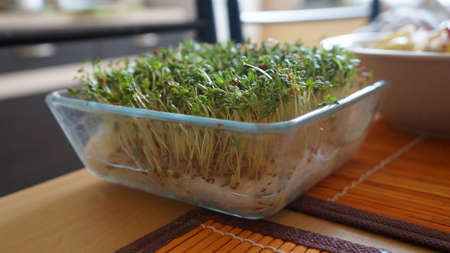 Of cress sprouts.