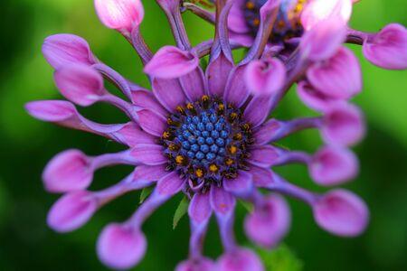 plantlife: Flower
