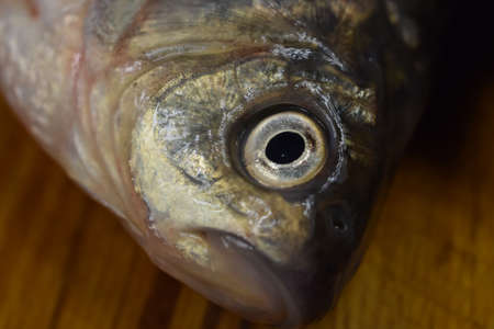 head fresh river carp close up with fish eye in focus Banco de Imagens
