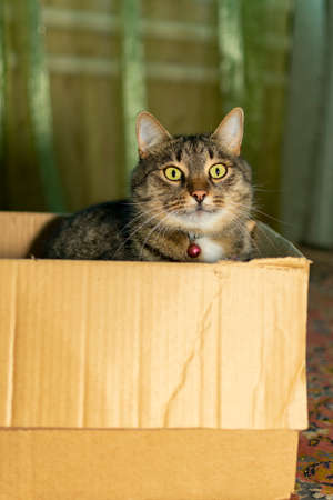 cat sits in a cardboard box at home in the room Imagens