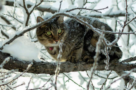 young cat sitting on a branch covered with snow in winter on a tree Imagens