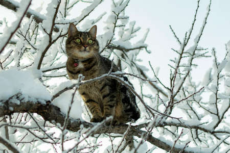 young cat on a frosty day on a branch covered with snow in winter on a tree