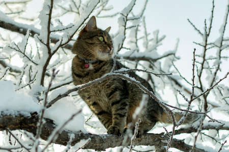 cat sits on a tree branch in the winter in the snow
