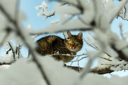 a young cat on a frosty day on a branch covered with snow in the winter on a tree is watching