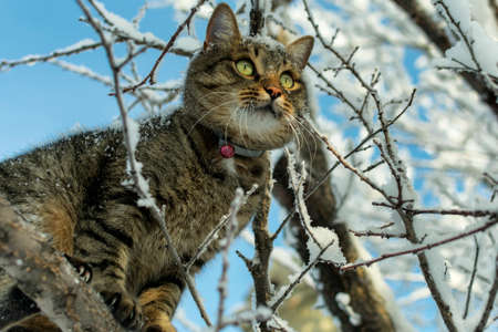 cat sits on a tree branch in the winter in the snow and looks into the distance