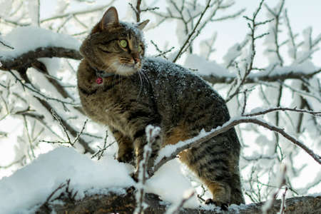 young cat on a tree branch in the winter in the snow and looks into the distance