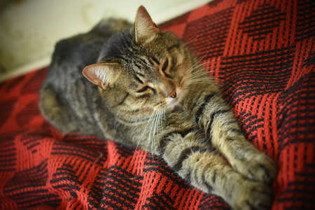 the cat lies stretched out on a red plaid on the bed Imagens