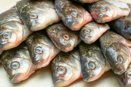 heads of fish laid out in a row on the table