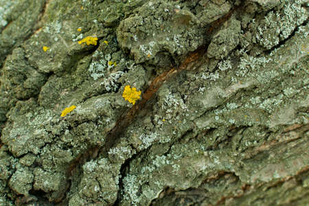 cracked bark of an old tree with a lichen closeup Imagens