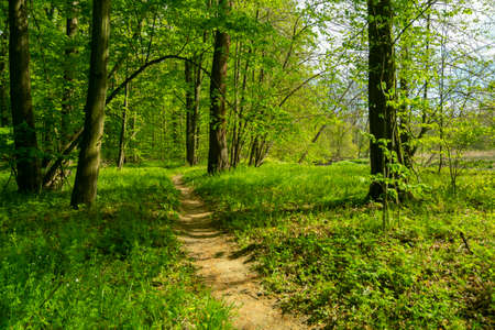 path for walks in the forest in spring, between trees and green grass Standard-Bild