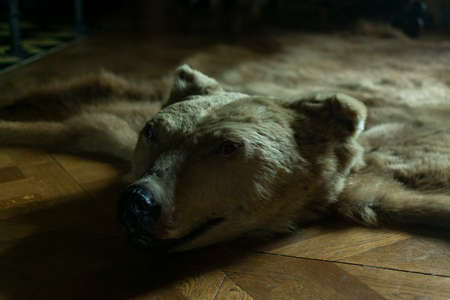 photo of stuffed bear on the floor