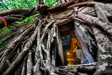 Temple in root of the big tree photo