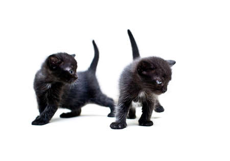 synchronously: Two black kittens explore the world around Stock Photo