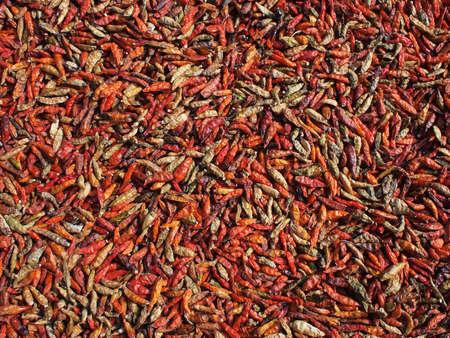 sundried: colorful sun-dried chilis