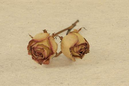 flores secas: 2 rosa