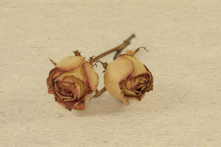 withered flower: 2 roses