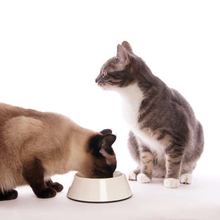2 cats with feeding bowl
