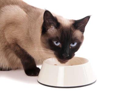 siamese kat met voerbak