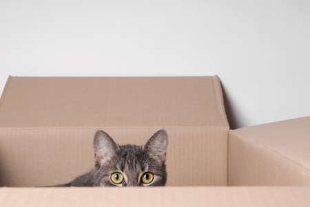 tabby cat hiding in a carton Standard-Bild