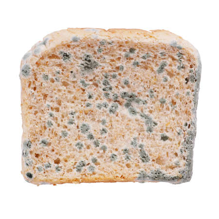 mouldy: moldy toast bread isolated on white Stock Photo