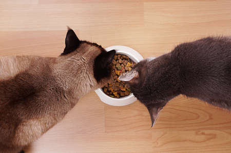 high-angle view of two cats eating from the same bowl of dried cat food