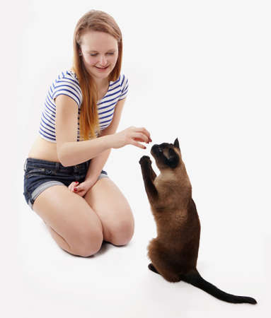 siamese cat sitting up and begging girl for a treat photo