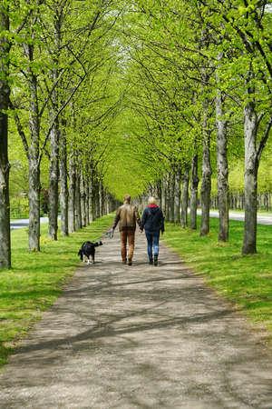 犬の散歩を取る若いカップルの背面図