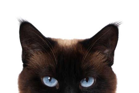 siamese kat met blauwe ogen gluren op wit wordt geïsoleerd