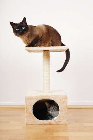 two cats resting on small cat tower or cat tree