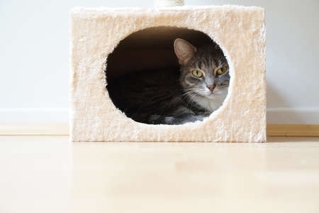 gray tabby cat resting in box shaped hideaway cat bed