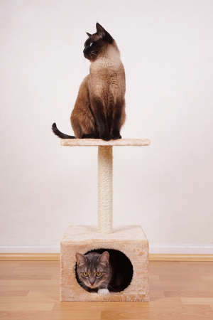scratcher: two cats on small cat play tower or tree