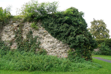 fortification: old overgrown fortification or city or town wall