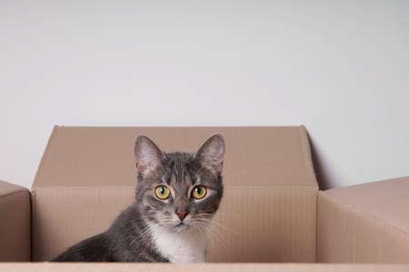 tabby cat sitting in a carton or cardboard box