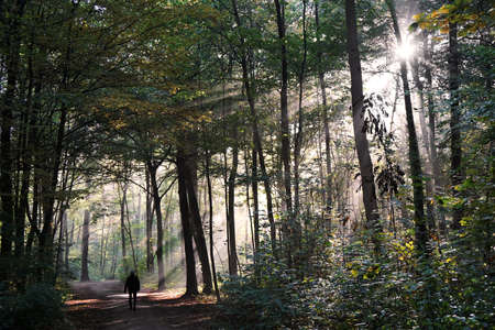 going: person taking a walk through mystic forest in fall, with sun flare and sunbeams cutting through the fog