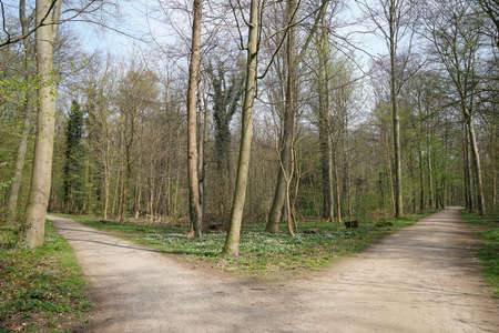 fork in a tree-lined forest path. decision or choice concept. Imagens