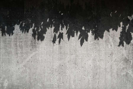 leaf shadows on gray concrete wall - abstract pattern background 版權商用圖片